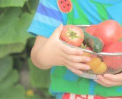 野菜を使った幼児食